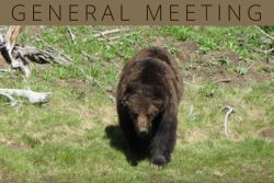 Bears At The General Meeting!